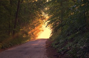 Sacred Path Reiki