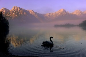 Dream Voyage of the Swan