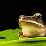 Frog Empowerment
