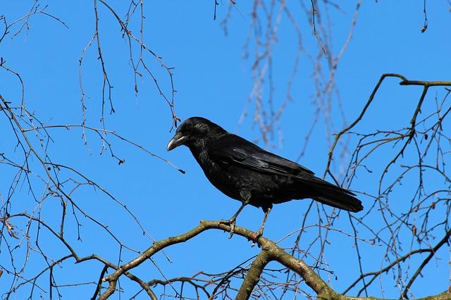 Crow Empowerment