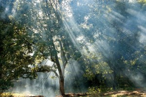 Negative Entities Clearing Reiki