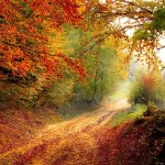 Magical Nature Reiki