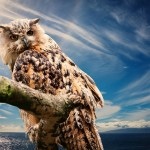 Wisdom of the Owl Empowerment