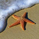 Celestial Golden Starfish