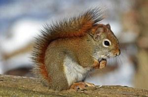 Squirrel Power Animal Empowerment