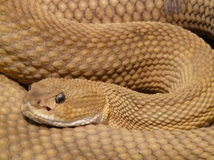 Snake medicine Empowerment
