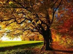 Magickal Tree essence Empowerment