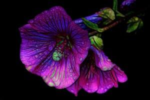 Psychic Gifts Flush Empowerment