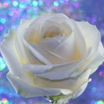 New Love, Light and Hope Reiki Attunement