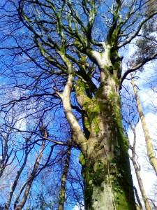 Celtic Oak Empowerment