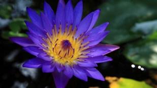 Blue Lotus Energy Healing System