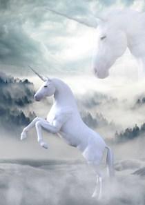 Unicorn Blessings Reiki