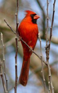 vertical-cardinal