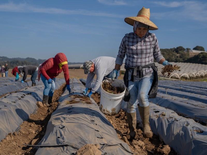 NFU Applauds Passage of Farm Workforce Modernization Act