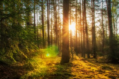 Majestic forest landscape with bright sun in the morning.   Suggests hope and success after connecting and communicating during the COVID crisis and using Emotionally Focused Therapy tools.