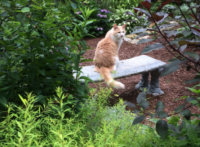 Cat on bench surrounded by plants. This is the location of New England Hold Me Tight lesbian couples retreats 2020.