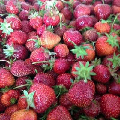 Strawberry Picking – 5 Things to Know Before You Go!