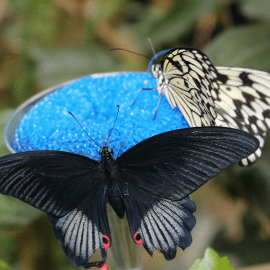 Immerse yourself among butterflies at either Magic Wings in Deerfield or The Butterfly Place in Westford, MA.