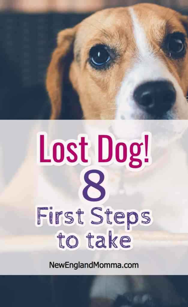 Here are 8 steps I recently learned while helping my neighbor find her lost dog as well as links to helpful Facebook resources in New England.