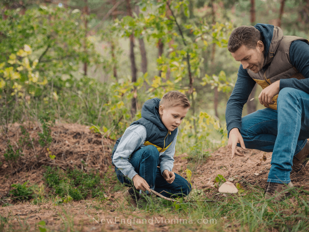 dad and son looking for letterboxing in the leaves
