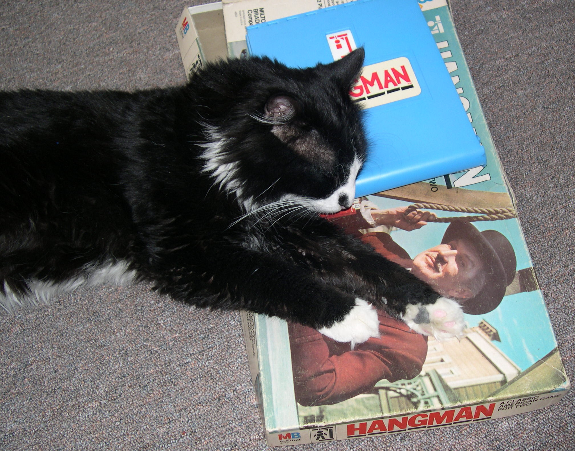 Cat sleeping on Hangman game