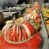 Fall Harvest at New Hampshire Farm Stand