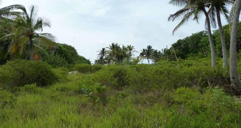 Basil Jones Land for Sale