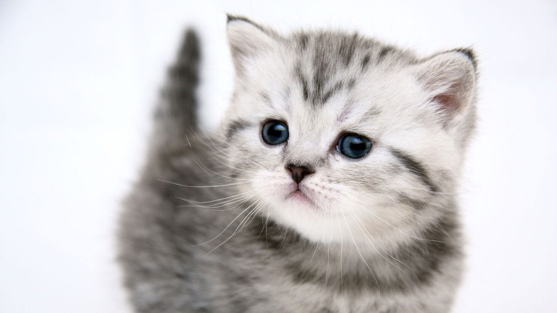 50 Free HD Cat Wallpapers Cat Wallpaper 2