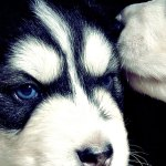 50 Hd Dog Iphone Wallpapers