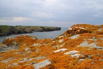 Sur les falaises de Belle-Île-en-Mer lors d'un séjour découverte en van