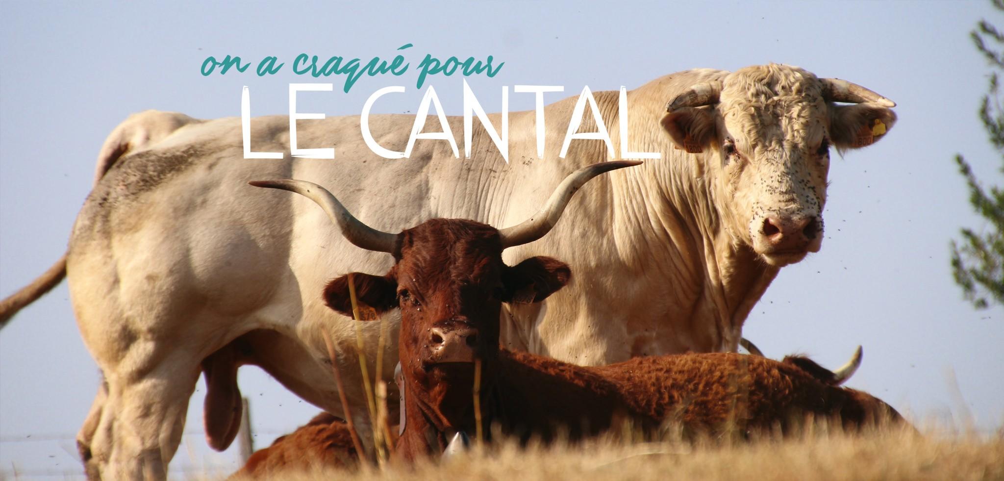 Pourquoi vous allez adorer visiter le Cantal ?