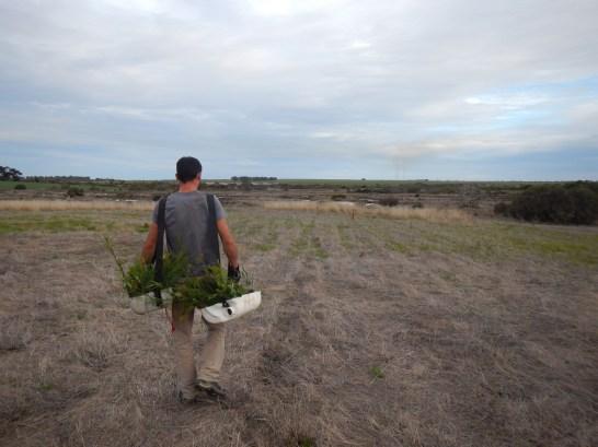 Planter des arbres dans le bush australien