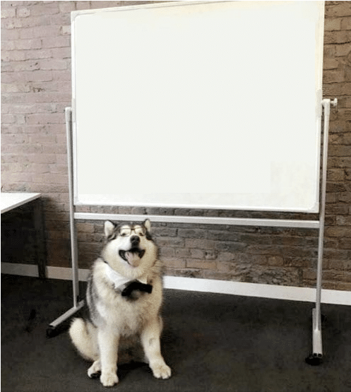 Meme Generator Dog Next To Whiteboard Sign Newfa Stuff