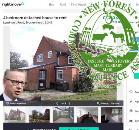 News | Friends of the New Forest