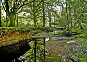 new forest wetland restoration