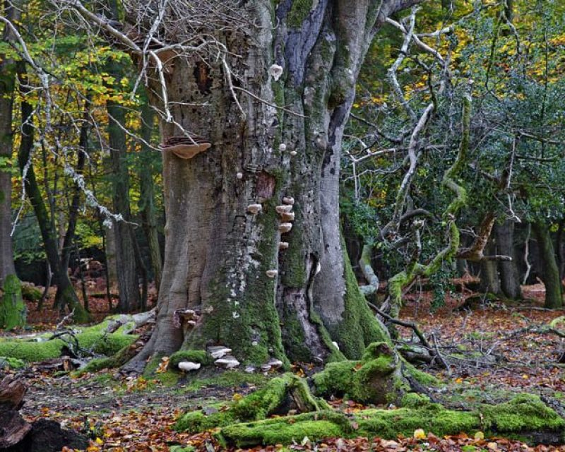new forest guide