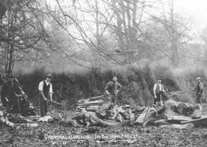 new forest - first world war