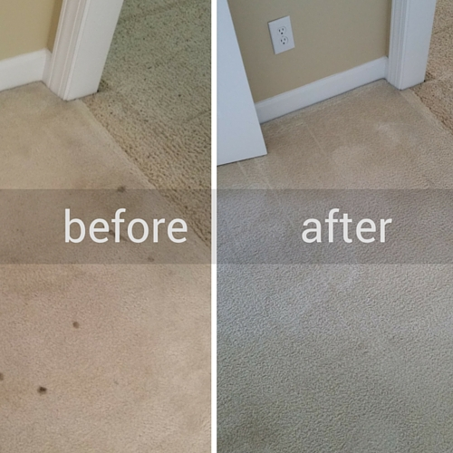 Newgen Restores Pet Stains Before and After