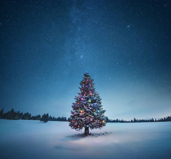 Christmas Trees to help Famers Helping Farmers