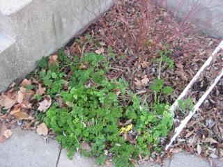 gardenupdate1109-2