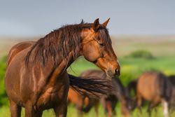Audrey Grace Horse Auction