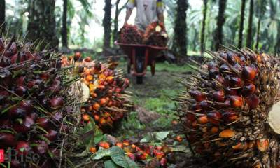 India's palm oil imports set to jump as tax cut lures refiners