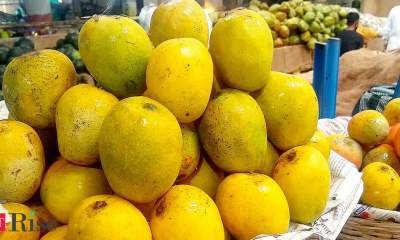 As wholesalers stay away due to curfews, mango orchard owners and co-ops sell lakhs of Alphonsos online