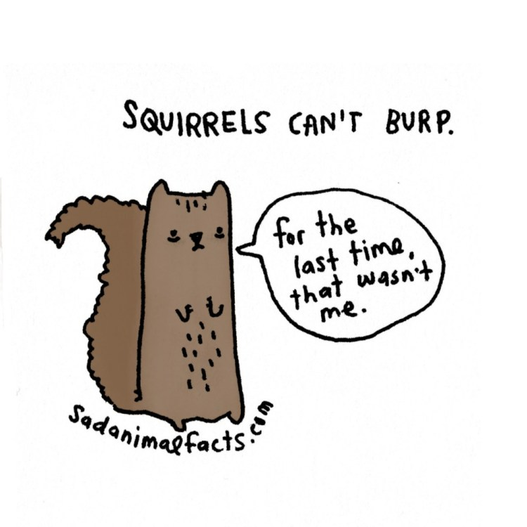 Sad-Animal-Facts-Squirrels