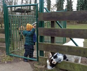 Cagefight für Kleinkinder: Kid A zu Besuch bei Spreewald-Ziegen. Die anderen Tiere haben ihn gar nicht interessiert.