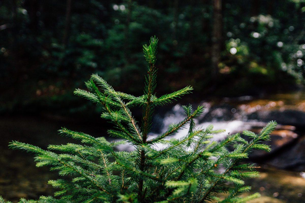 New Leaf Arboriculture Arborist and Tree Service - Stock Image 01