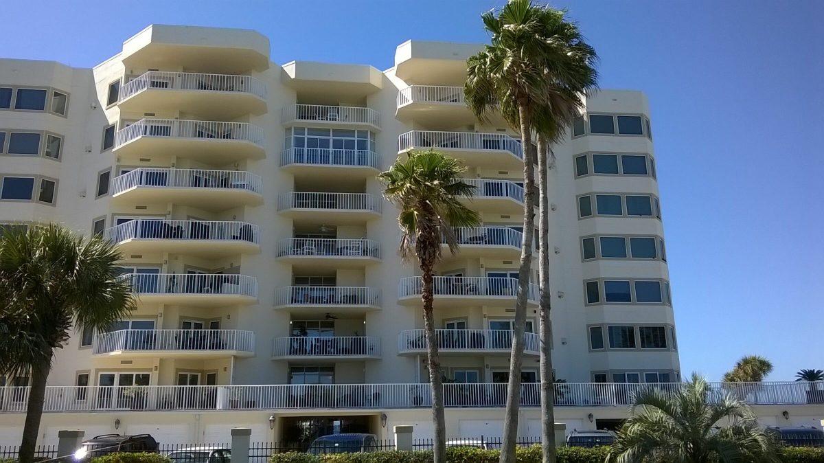 Gulf Shore Dr, Destin, Florida - Washingtonia Palm 02