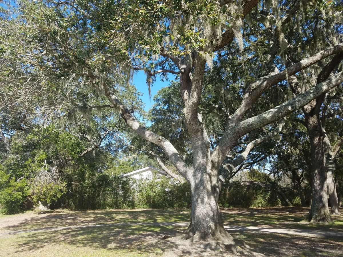 Southern Live Oak-Fort Walton Beach Florida-04