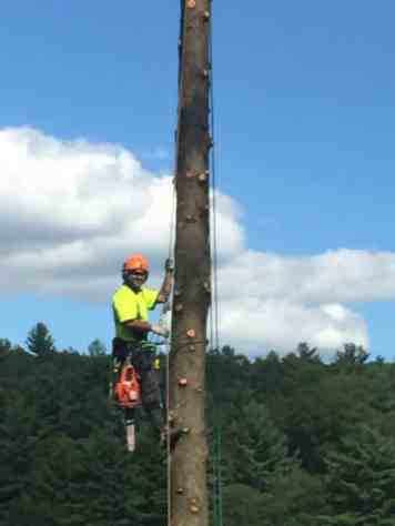 New Leaf Arboriculture - Arborist & Tree Service - Tree Climbing
