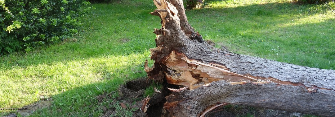 Emergency Tree Removal And Hurricane Cleanup In Panama City Beach Featured Image